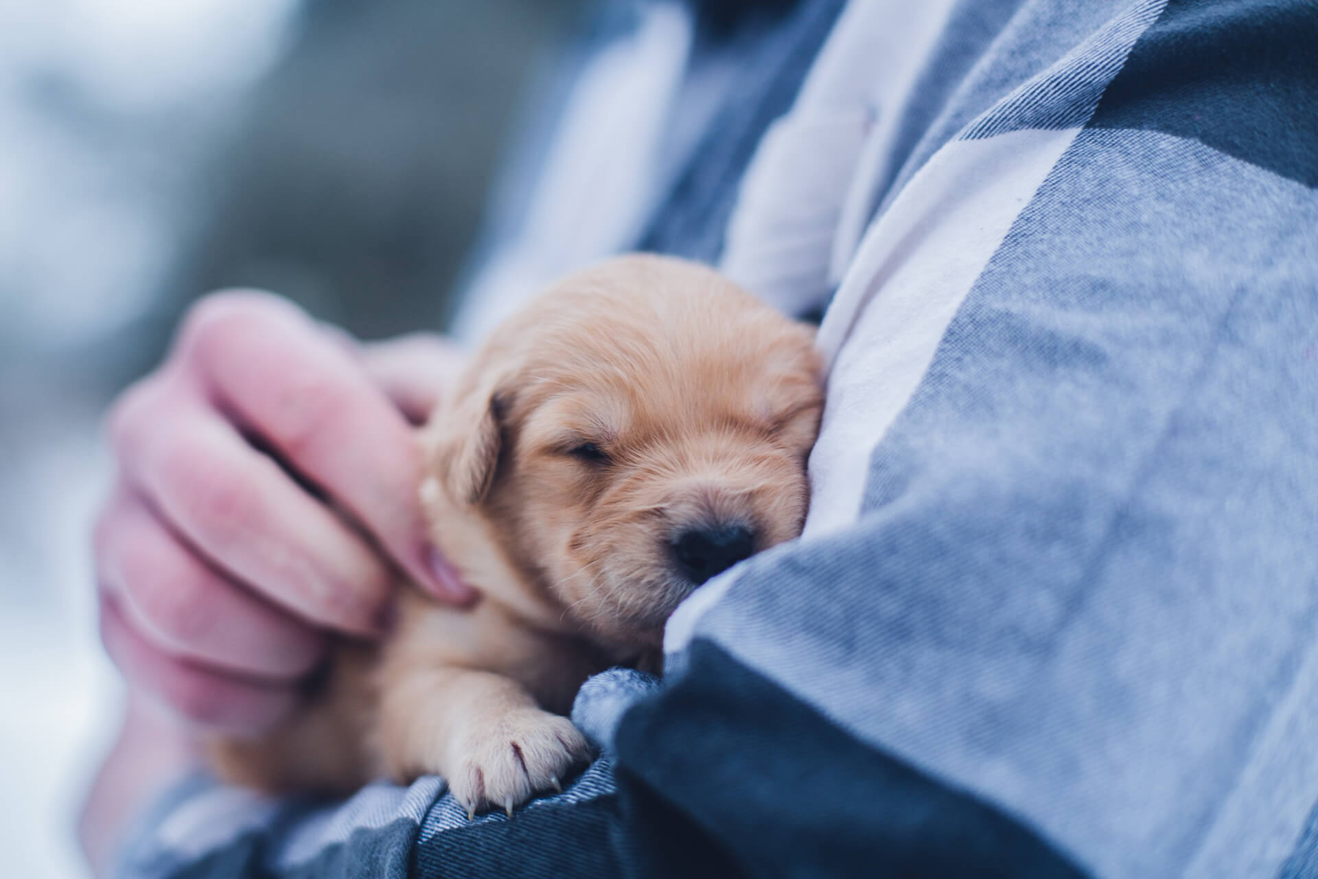 Puppies May Protect Babies From Allergies and Obesity